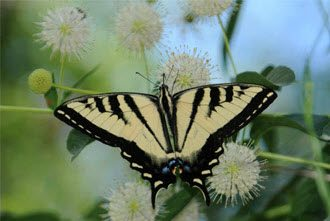 slide-3-butterfly-2017-12-03_20-23-47